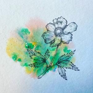 anemone-til-sangbog